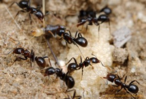ant worker